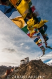 Prayer Flags, Maitreya Monastery, Leh (portait)