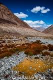 Vegetation, Ladakh