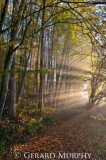 Autumnal Sunbeams