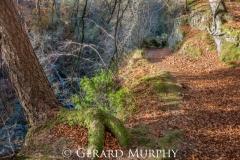 Mossy Root, Glen Esk