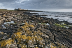 Dunstanburgh Castle Lichen on Rocks