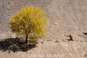Autumnal-Shade-Ladakh.jpg