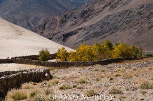 Plantation, Ladakh
