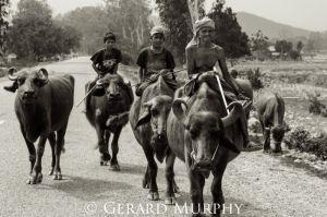 Cowboys, Nepal
