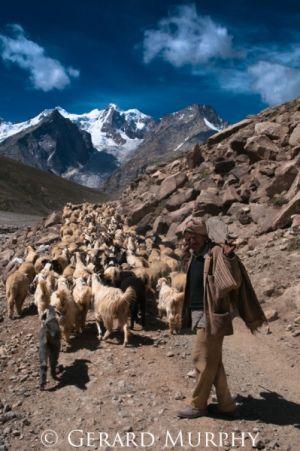 Herding, Lahaul