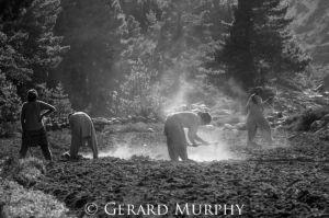 Ploughing, Sowing and Resting, Kinnaur