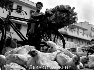 Chicken Delivery, Tamil Nadu