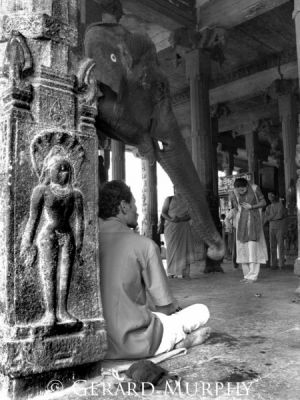 Elephant Blessings, Tamil Nadu