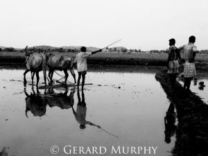 Ploughing Directions, Tamil Nadu