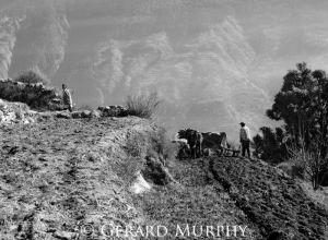 Ploughing Terraced Fields, Kullu Valley