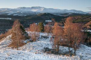 Autumnal Birches and Lochnagar